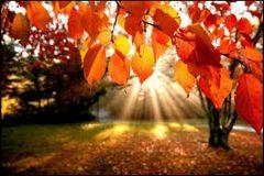 Photo: autumn trees