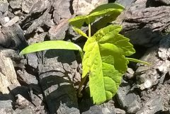 Photo: seedling